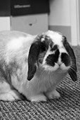 dog the bunny_bw headshot-1-crop-u1619296